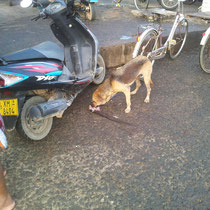 Ein Strassenhund darf nicht wählerrisch sein.