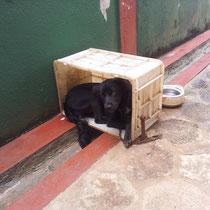 Leider die beste Hundehuette die ich gesehen habe, leider ist der arme an einer 1,5 m kurzen Kette