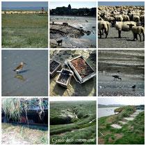 Traversée baie de Somme, guide baie de Somme