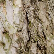 Ein Baum erzählt aus seinem Leben