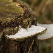 Pilze tun ihre Arbeit