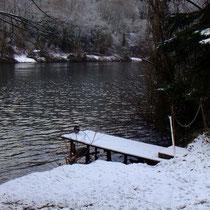 Eine Ente auf dem Steg, 6 andere im Wasser    Bild: PeWe