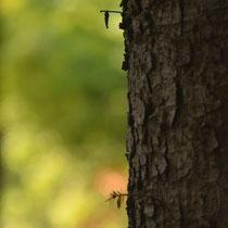 みの虫はあの中でいつも世界のことを考えているのです