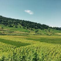 Die Klinik liegt wunderschön im grünen Kathmandu-Tal.