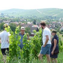 Bis zur ersten Ernte dauert es 4 Jahre. Wir sind schon sehr gespannt auf den Muscaris-Wein.