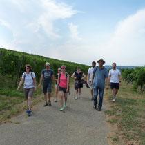 ... ging's für die anderen zur Weinwanderung in den Ebringer Sommerberg.