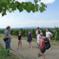 Bei der Weinwanderung ging es v. a. darum, was naturnaher Weinbau mit PIWI-Reben bedeutet. Zudem gab es viele Einblicke in die Ebringer Wein- und Kulturlandschaft damals und heute. Haben Sie auch Lust auf solch eine Tour mit Weinprobe? Schreiben Sie uns!