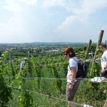Erste Station: die neueste Pflanzung unserer PIWI-Reben. Seit Mai 2017 gedeihen hier unsere pilzwiderstandsfähigen Reben der Sorte Muscaris - und genießen den tollen Blick in die Rheinebene.