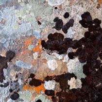 Lichenes - 1