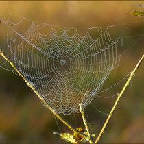 Herbstzeit-Spinnenzeit