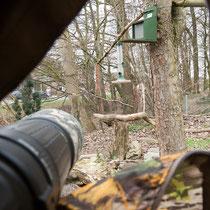 Blick aus dem Tarnzelt