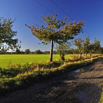 Burgenser Weg