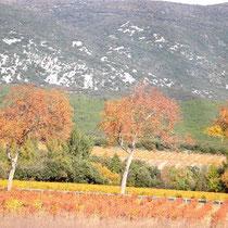 Herbststimmung - aber mediterran