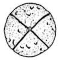 """Der """"Tata Pebble"""" aus Ungarn - Kreuzritzung auf einem Geröllstein vor ca. 100 000 Jahren; womöglich von einem Neandertaler hergestellt"""