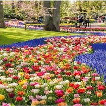 Endlose, prachtvolle Tulpenfelder