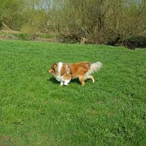Schnell durchs nasse Gras traben macht Spaß!