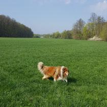 Nochmal durchs nasse Gras toben