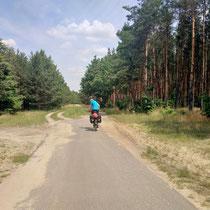Feiner Radweg durch duftende Föhrenwälder in Polen