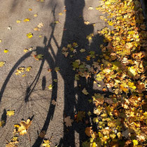 Herbstliches radeln in Wien