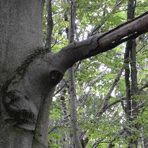 Natürliche Baumverformungen die auf dem Weg stehen.