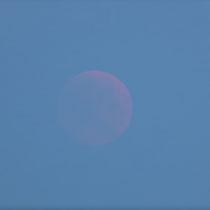 Luna Totalmente eclipsada saliendo por el horizonte de dia