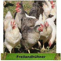 klick Freilandhühner