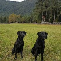 Sage & Murphy (Herbst 2017)
