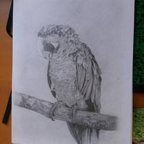 Werkstuk grafiet tekening cursist Karin