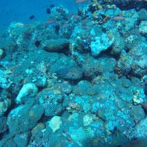 Russkopfmuräne, Gelbbrandtmuräne, Bali, 2017, Tauchen, USS Liberty, Wrack, Coral Garden, Indonesien