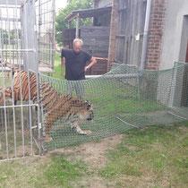 Produktion mit Tiger - Tiger im Lauftunnel