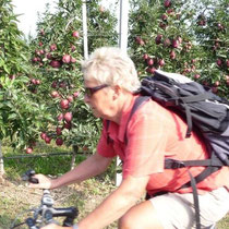 radeln im Südtiroler Apfelgebiet