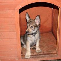 Herr Hellblau als stolzer Bewohner der Hundehütte