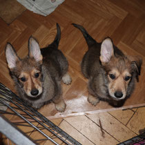 Cosmo und Charly