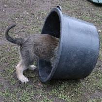 Wer steckt da im Eimer?