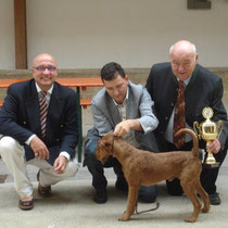 Best in Show: Irish Terrier