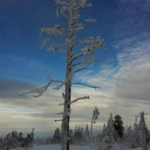 Schneeschuhtour mit sports-outdoorguide.de