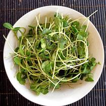 Radish and sunflower microgreen salad - very tasty!