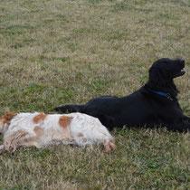 Toja und Gino ganz relaxt