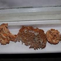 Details vom Nest