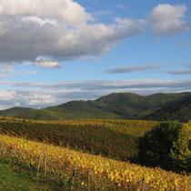 Vignes à l'automne (Vallée de Munster)