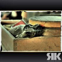 patina · #ablagerungen_grünspan_rost · 2010-06-26-029 · yak © 2010 RK