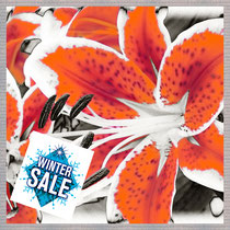 winter_sale  ·  motiv:  lilien_blüte_orange ·  2006-07-13-024_c7 · yak © 2006 RK
