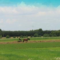 Pferdefuhrwerke sieht man noch sehr oft