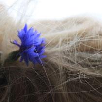 Kornblume im Haar