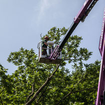 Schiller Gartengestaltung - Garten und Landschaftsbau Cuxhaven - Baumpflege