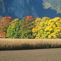 Herbstbäume in Reutigen
