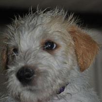 Elice ist zwar nass und dreckig, aber glücklich. Das ist die Hauptsache!