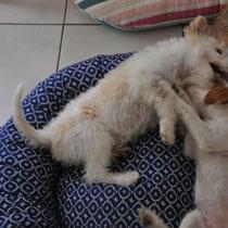 Elice und Effie - ein letztes Mal Toben und Spielen vor der Heimfahrt