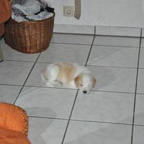 Edison - ob er wohl später überhaupt mal im Crunchy oder auf Kissen schlafen wird??? Er schläft immer irgendwo auf der Erde ein ;-).