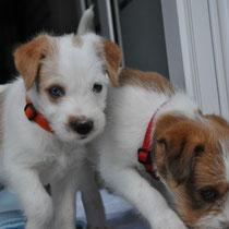 Effie und Emmi
